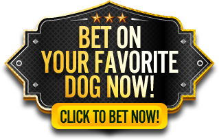 Click to bet on your favorite dog now!